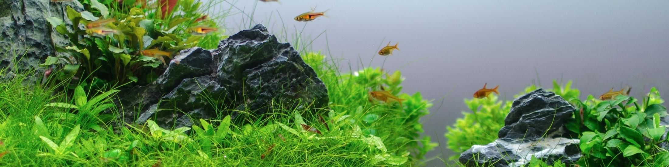 sinkor aquarium web about sinkor aquarium brand